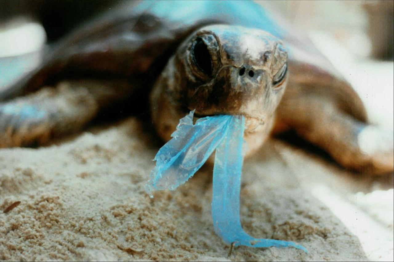 Image result for plastic turtle