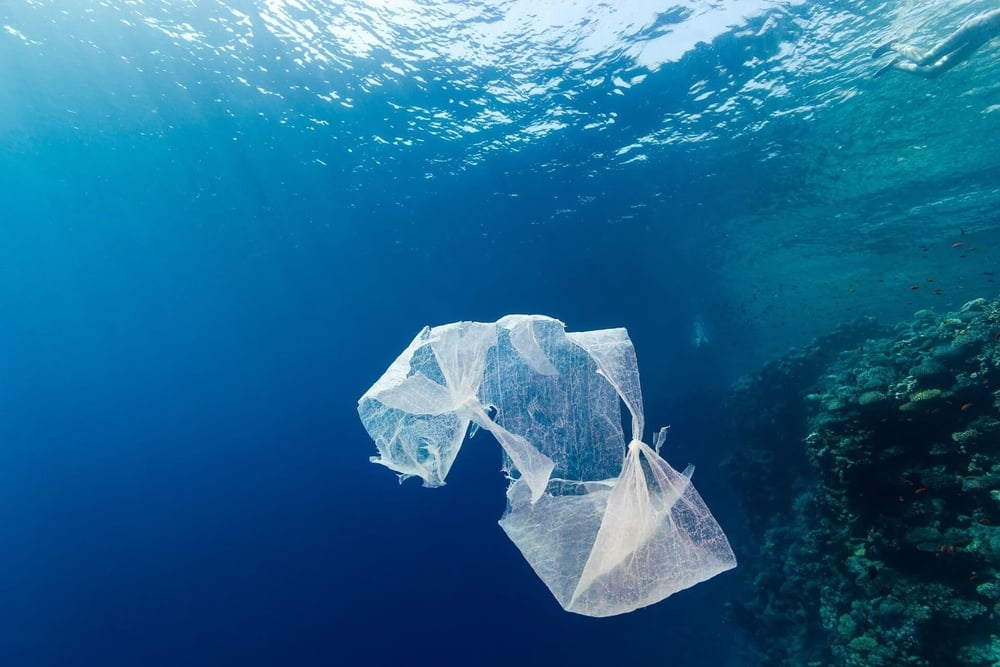 Plastic is a substance the Earth cannot digest.   REFUSE SINGLE-USE PLASTIC
