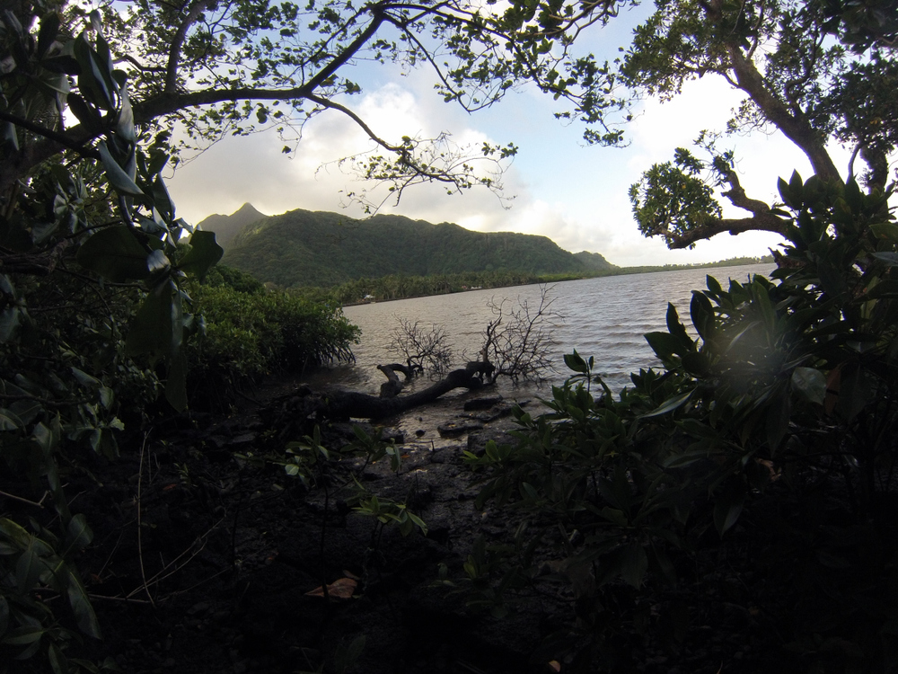 A picturesque scene from the Nu'uuli mangroves. Unfortunately, everything isn't as beautiful as it seems.
