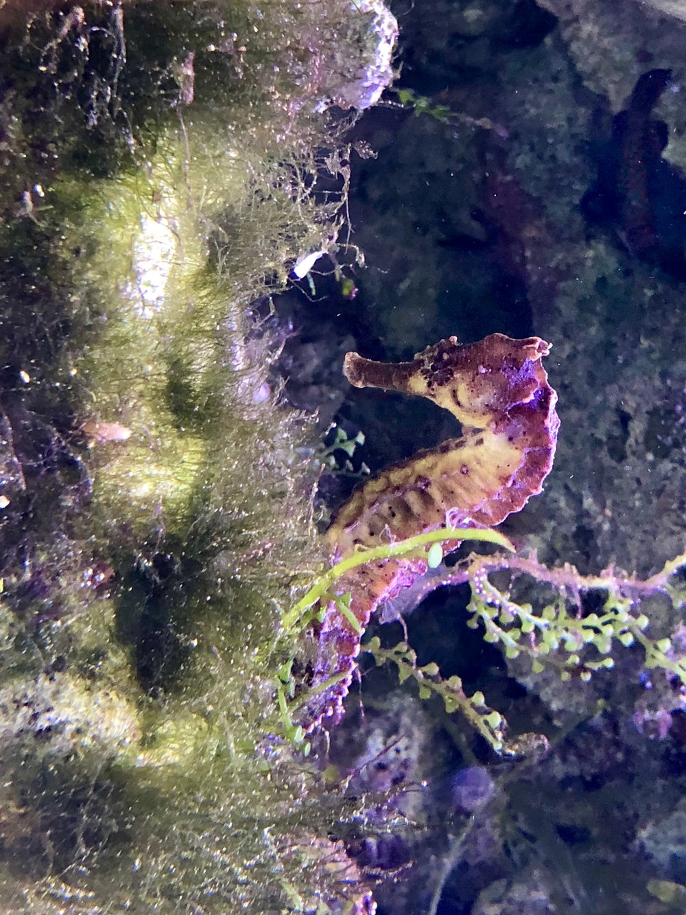 Seahorse photo by Dianna Cohen.