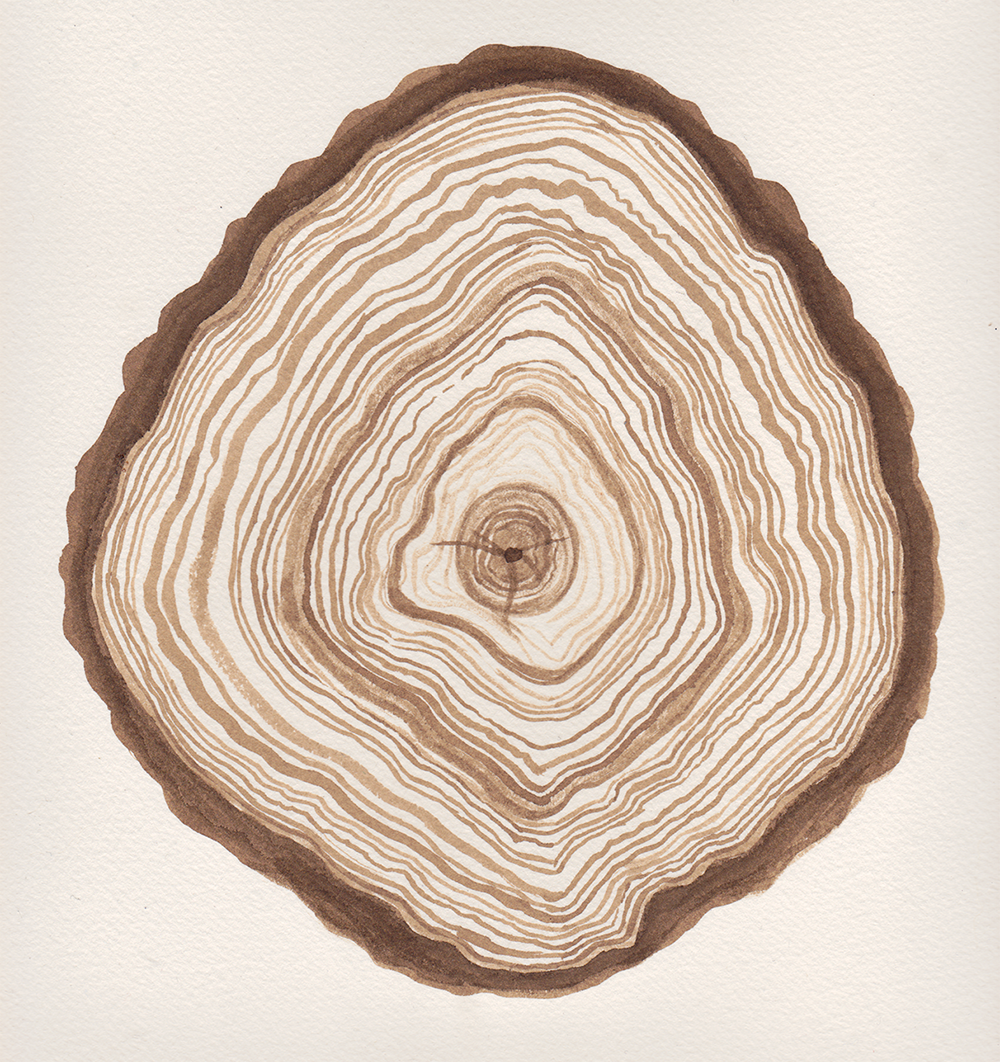 tree_ring_angela_faz_.png