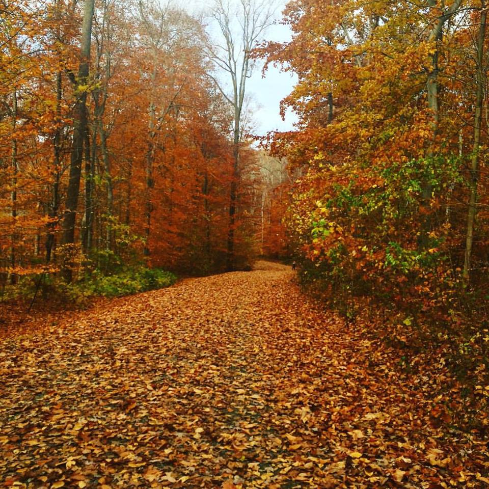 Autumn Leaf Laden Trail.jpg