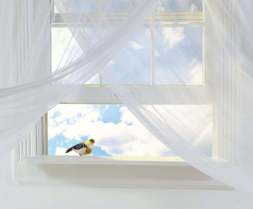 Open Window bird.jpg