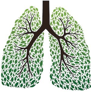 Lungs-as-trees.jpg