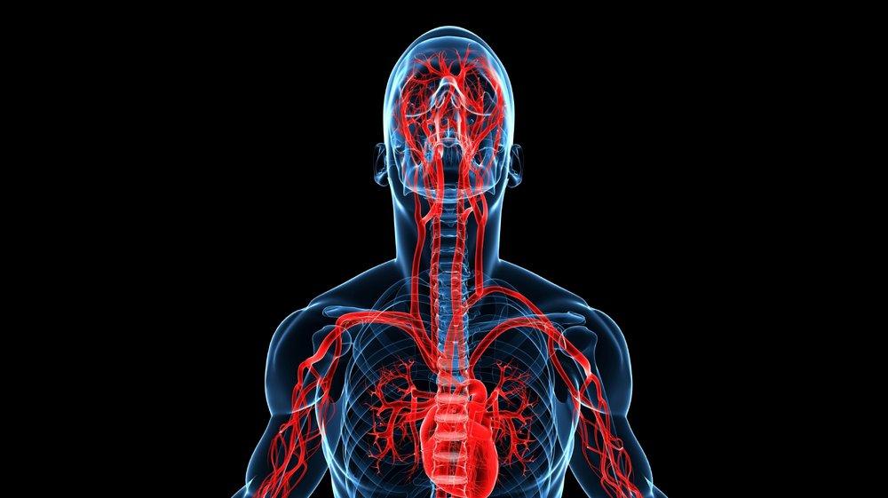 Vascular-system-000017338786_Large copy 2.jpg