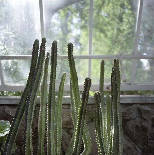 CactusFingers.jpg