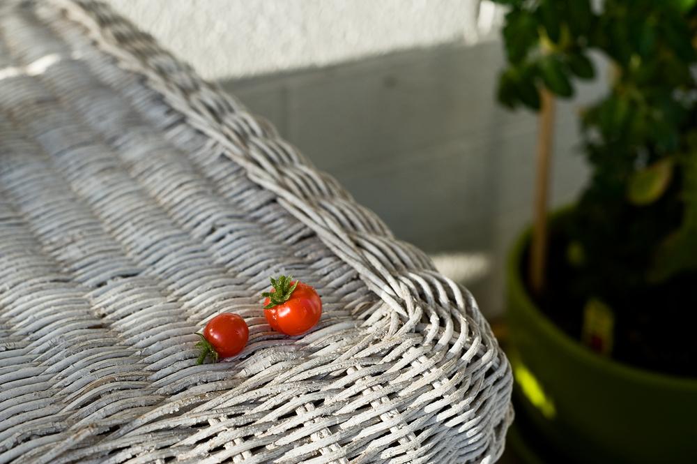 AZ_1st-tomatoes.jpg