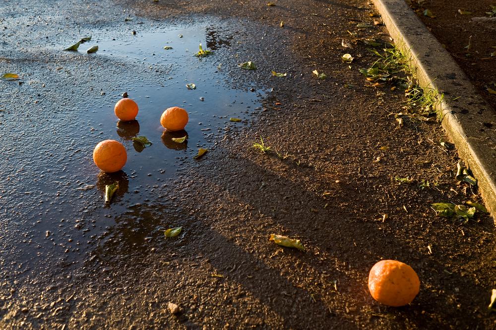 4 oranges.jpg