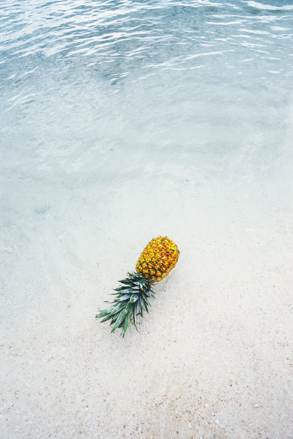 pineapple-supply-co-244468.jpg