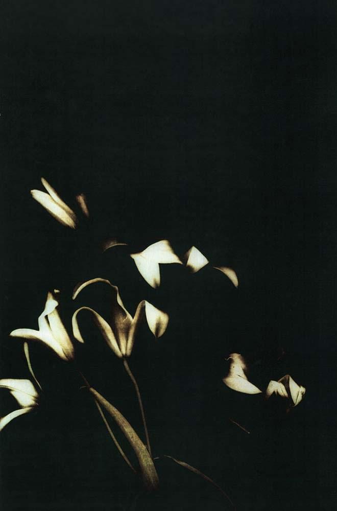 Night-Lilies_660.jpg