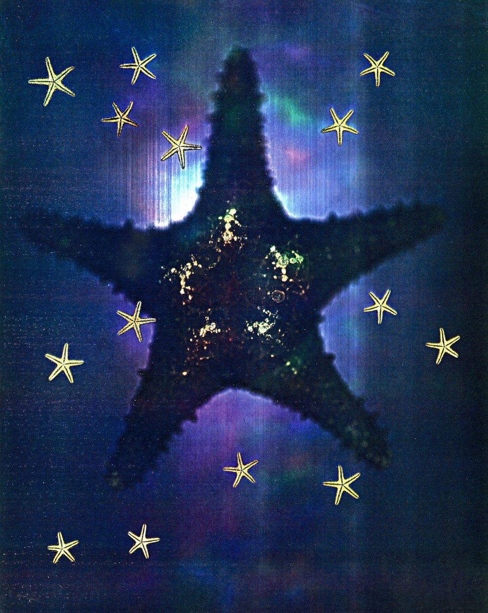 24 Starfish copy.jpg