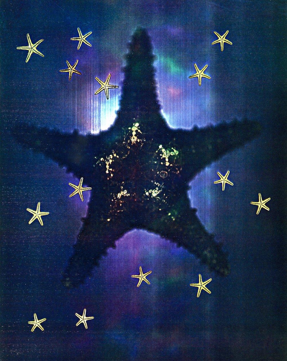 24 Starfish copy.jpg