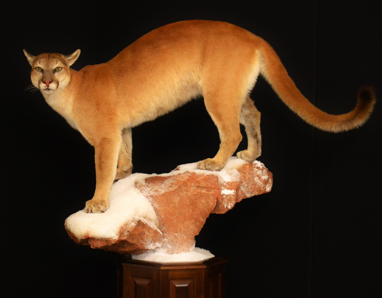 female lion pedestal.jpg