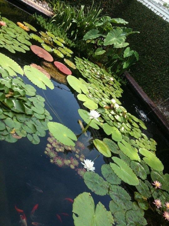 My water garden.