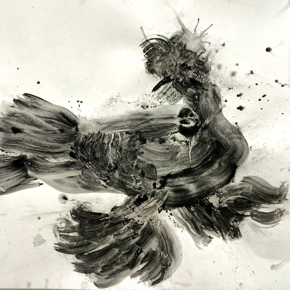 "GERMAN BEAK - CRESTED TRUMPETER  19"" X 24"" charcoal 2014"