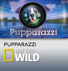 PupparazziWidget.jpg