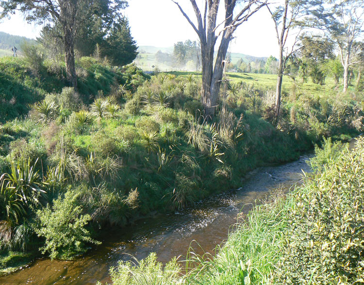 An example of Integrated Catchment Management, Riparian Planting on Dairy Farm, Motueka, New Zealand.