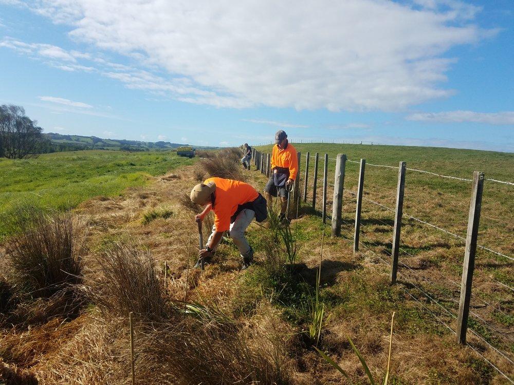 Boundary planting