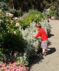 garden_pathw.jpg