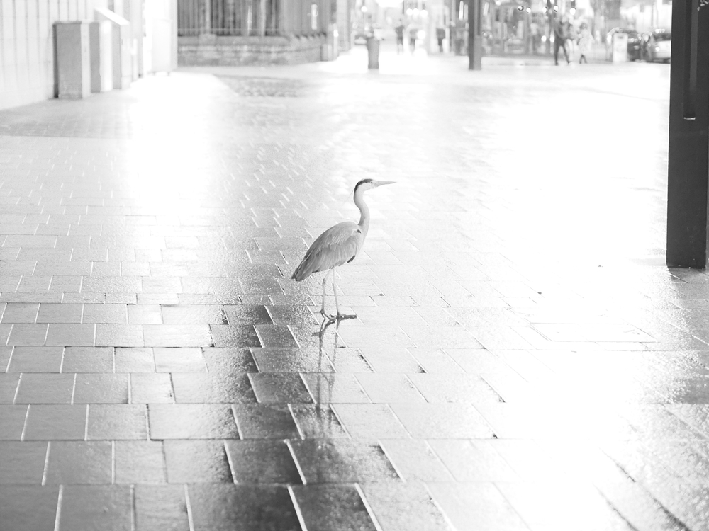 Stork/Shane Vaughan
