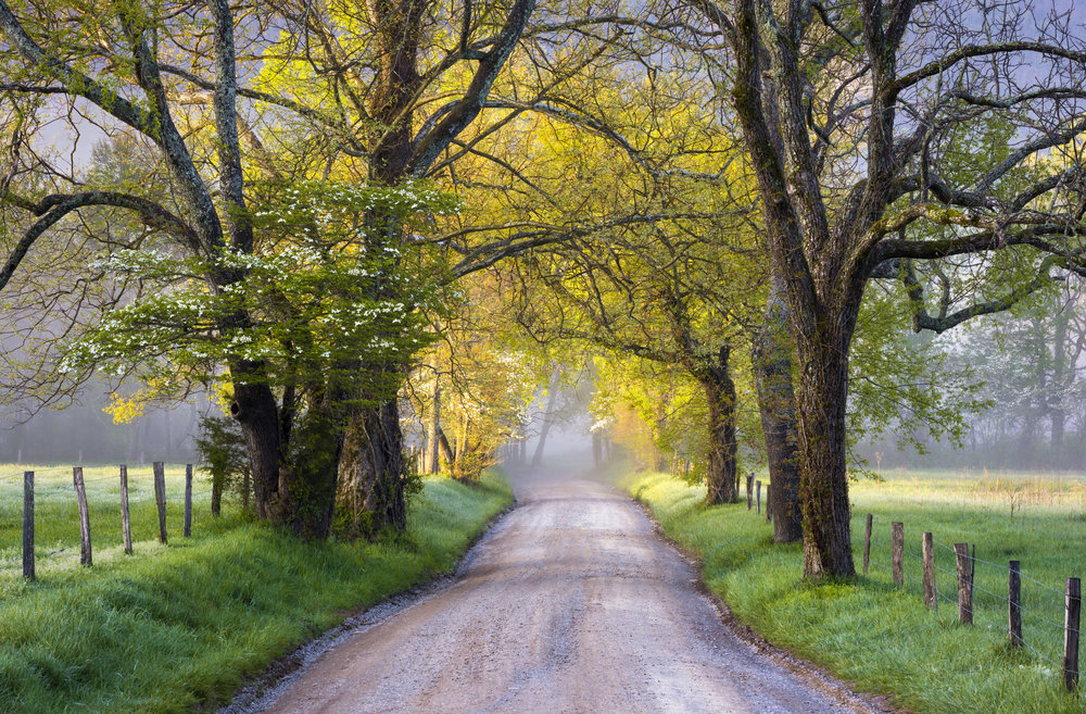 Road with trees.jpg
