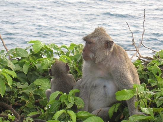 1.1301694577.monkey-island.jpg