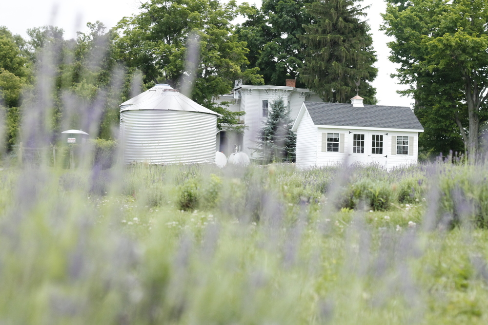 Lockwood Lavender Farm // Farmhouse