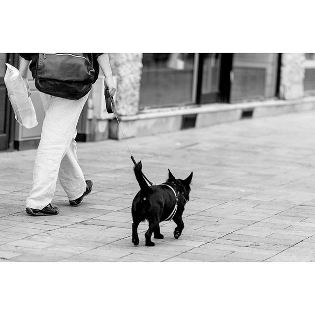 Sunday morning stroll through Thionville, France . . . . #europe #dog #travel #travelphotography #traveldeeper #tlpicks #streetphotography #blackandwhitephotography #stroll