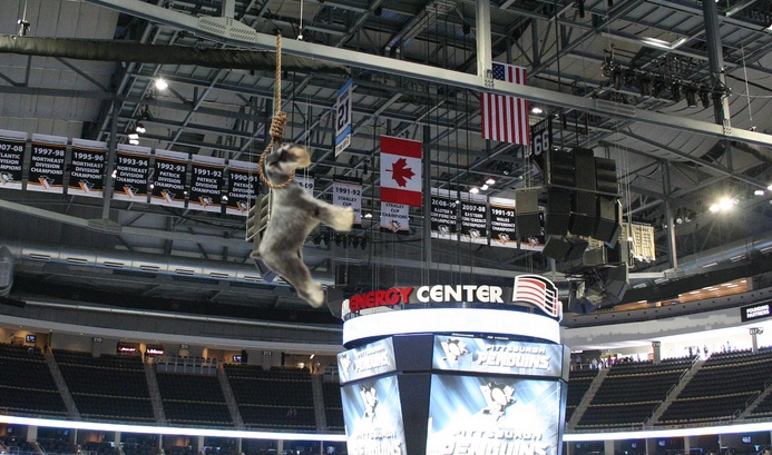 Justin Schultz's dog Billy dangles from the rafters prior to Friday's practice session. Arena picture provided by  Dave