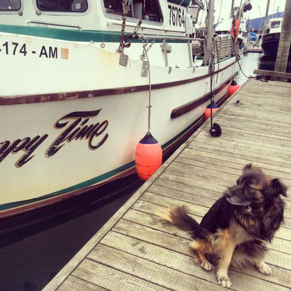 Keeja the dog keeps an eye on our 42' troller the F/V Happy Time.