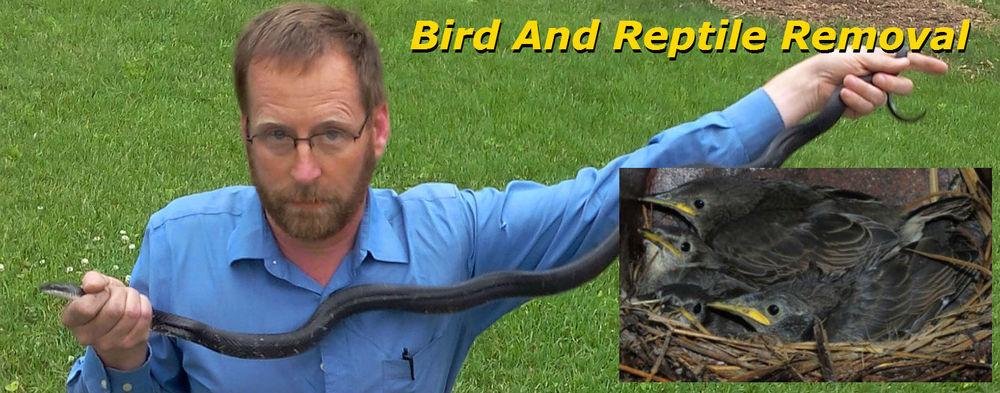 snake and bird2.jpg