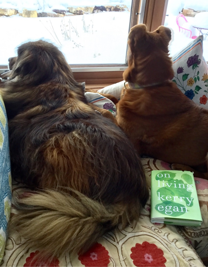 Mojo and Luna with Kerry Egan's book. Avid readers.