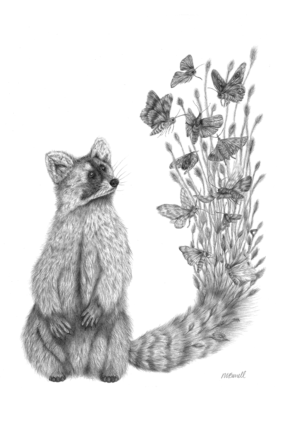 """Ricky Raccoon, graphite drawing on paper, 24"""" x 18"""",  2016, and is part of the Migration  Series."""