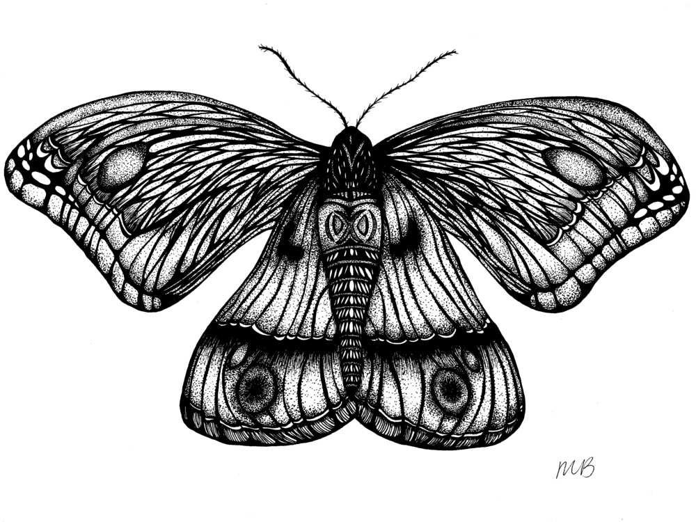 """Lady of Disguise"", ink drawing on paper, #22 in the Insect Series, 12"" x 9"", 2016."