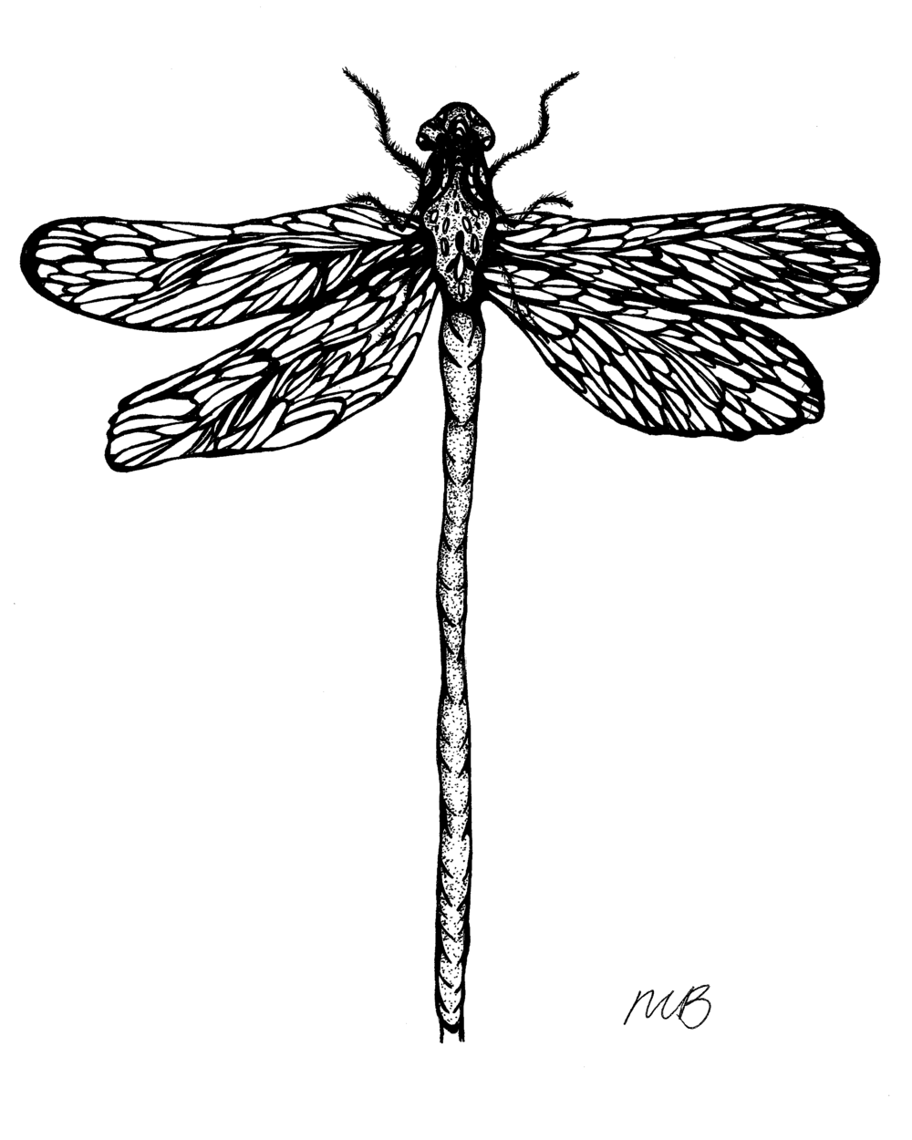 """""""Poised"""", from the Insects Series, #15, ink on paper, 8"""" x 10"""", 2016."""