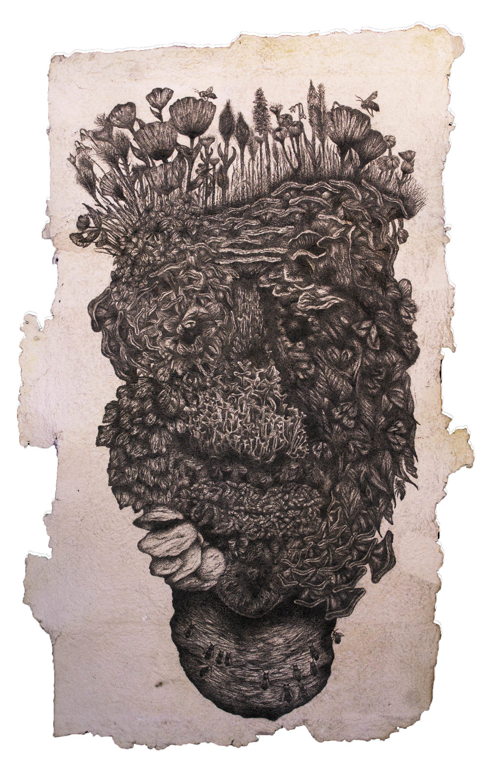 "Media: Graphite, hand-made paper  Size: 21"" x 38""  Completed in 2015, ""Evolved Generations"" is the second piece in the ""Evolved Series"". This image, like the others in this series depict a human face, that has been composed using textures and plant, and insect life. When making this drawing, I was thinking about our human connections to life, and how every part of our being has been made possible through our environments. I then began to question the human existence and what would our remains, or the shrines placed only for human consumption, would look after being left to nature's devices."