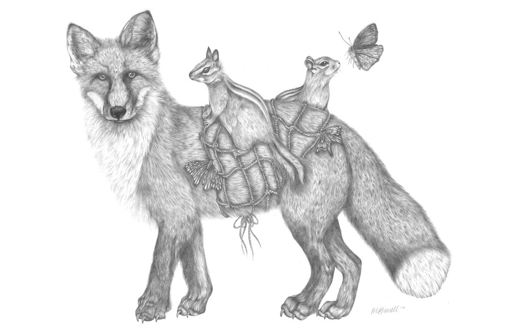 """Caroline"" is a 18"" x 24"" graphite drawing and depicts a red fox. This work was completed in 2016 and is part of the Migration Series."
