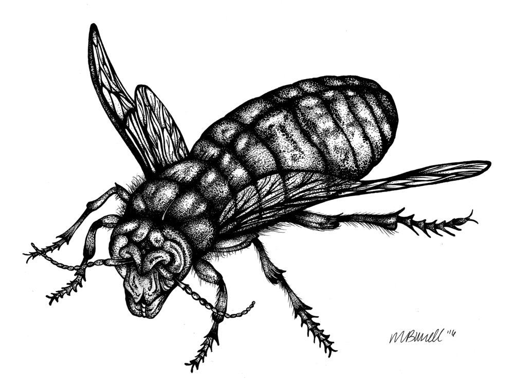 From the Insect Series, 2016.