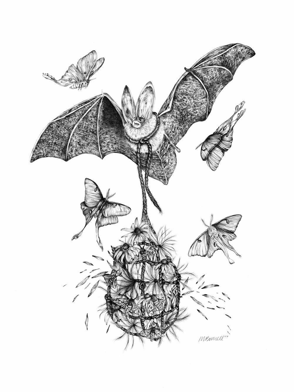 """""""El- Bay"""" is a graphite original completed in 2017. This work featured a Virginia Big-Eared Bat that has an endangered status. Surrounding El-Bay are luna moths and he carries a sack of flowers and seeds. This is the last segment in the Migration series. Check out the Special Edition Digital color print as well!  Materials: graphite pencil, paper  Size: 24"""" x 18"""""""