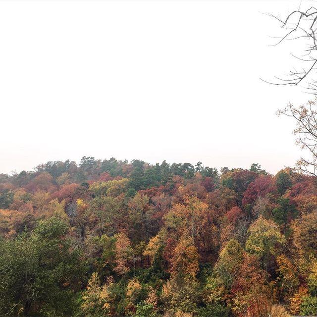 Hello, Fall 🍂🌲🍃 #dearllewyntravel