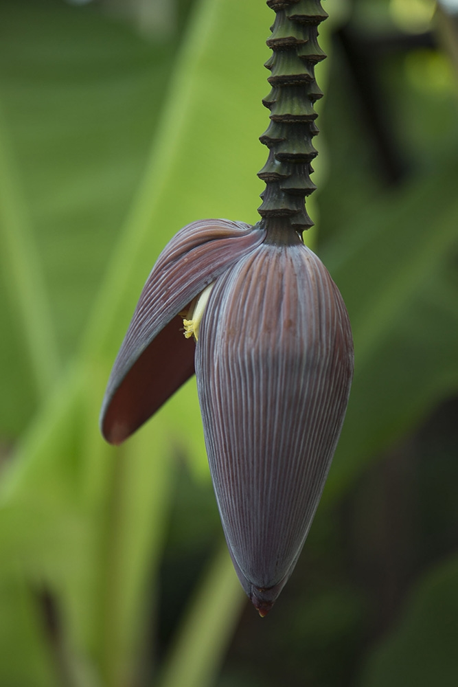 030_banana.jpg