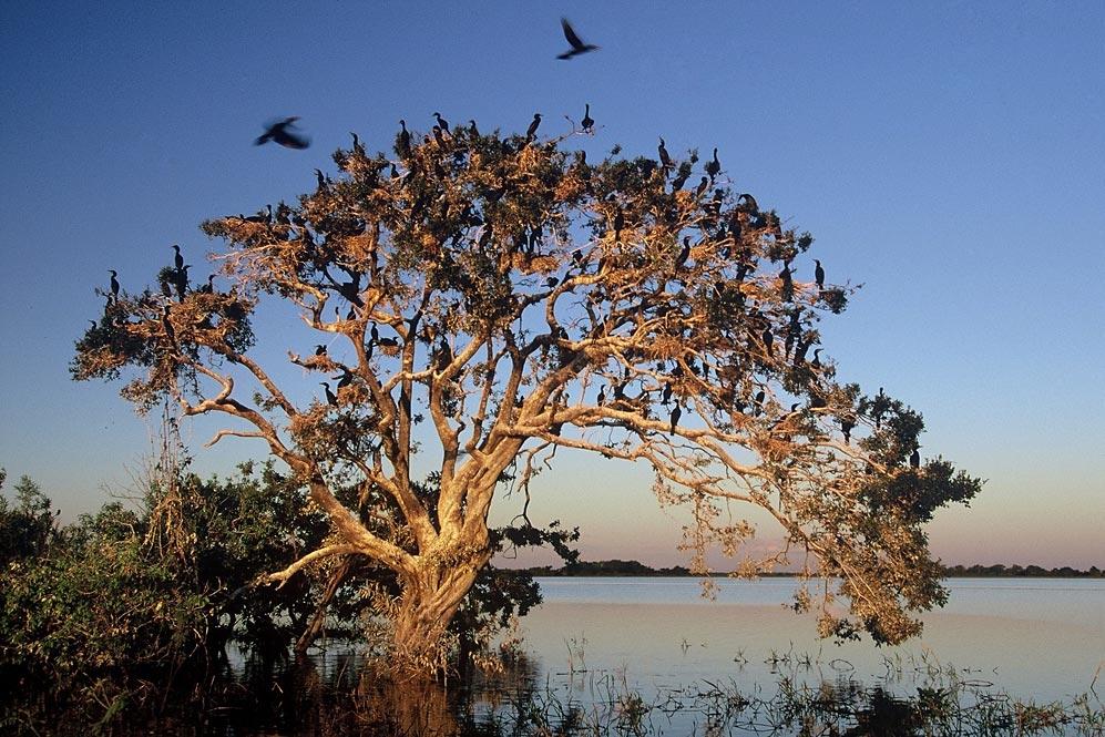 010_pantanal.jpg