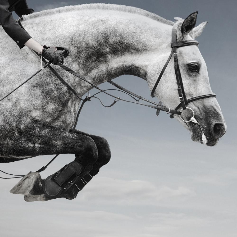 gray horse show jumping.jpg