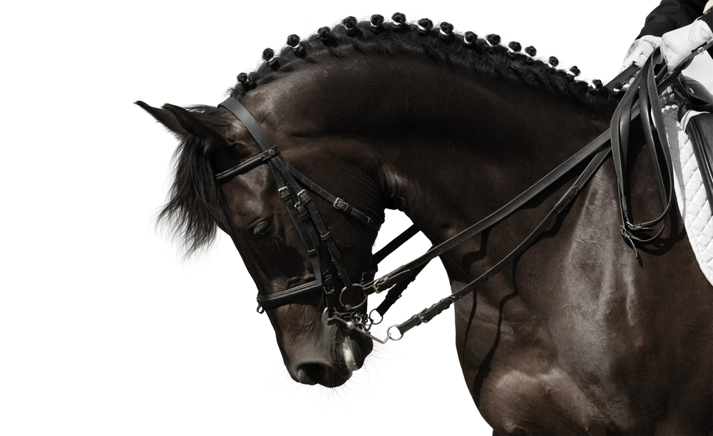 dreamstime dressage horse Toffe look a like.jpg
