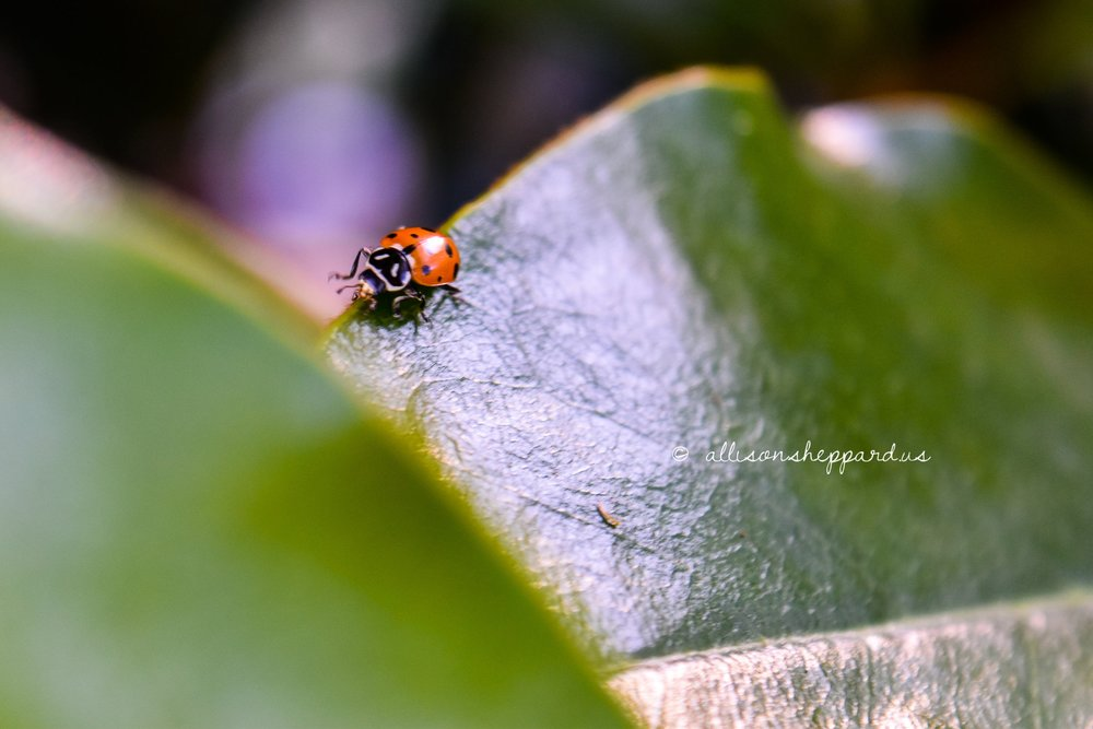 fauna-lady-0213.jpg