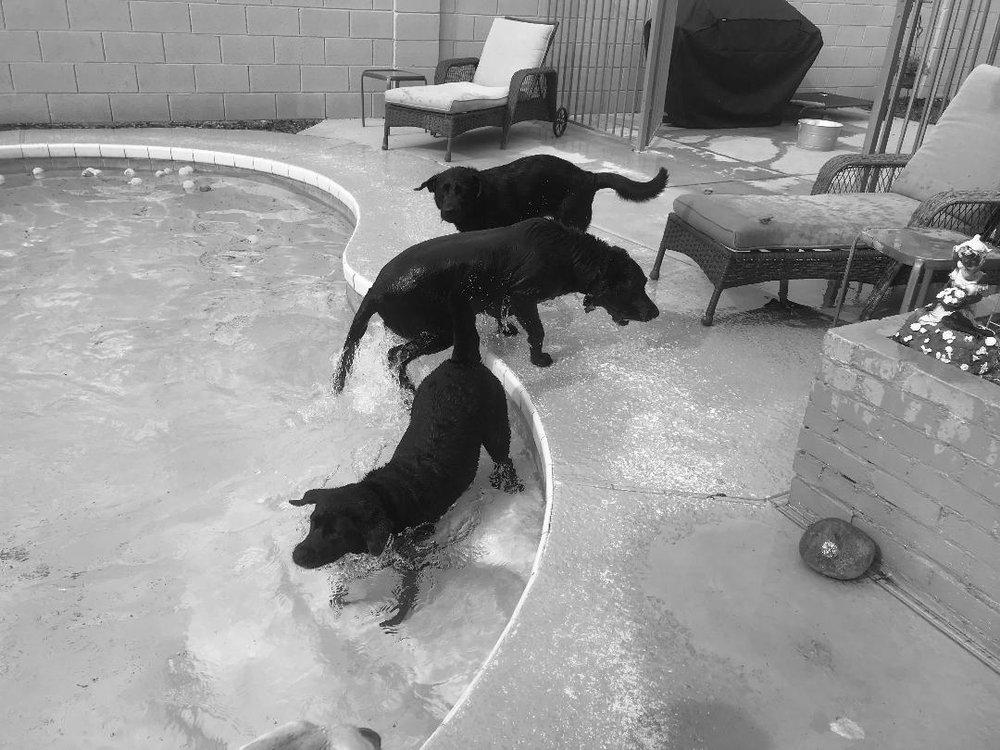 Kiki, Koko and our dog Sammy. Spring Break 2019