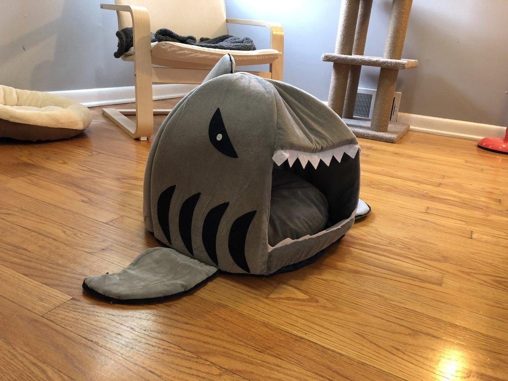 Shark bed!