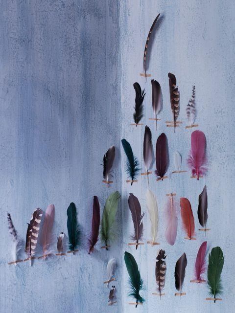 munan15 :     Feathers