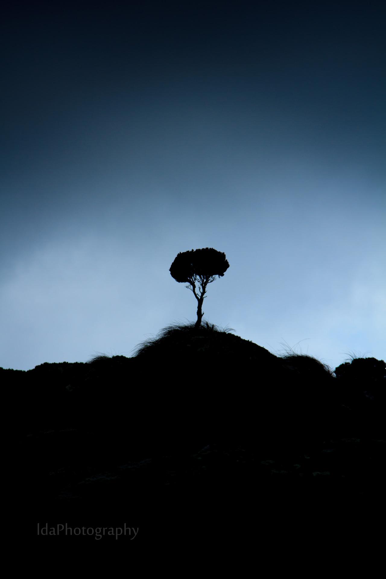 lda-photography: African Bonsai