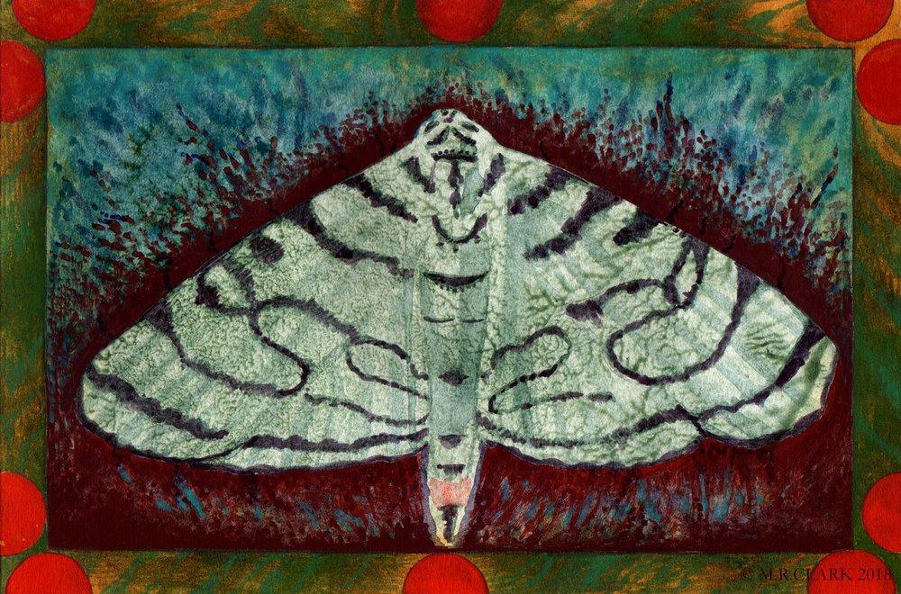 Zebra Moth